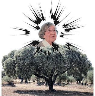 TeodoraCardosoSanta01